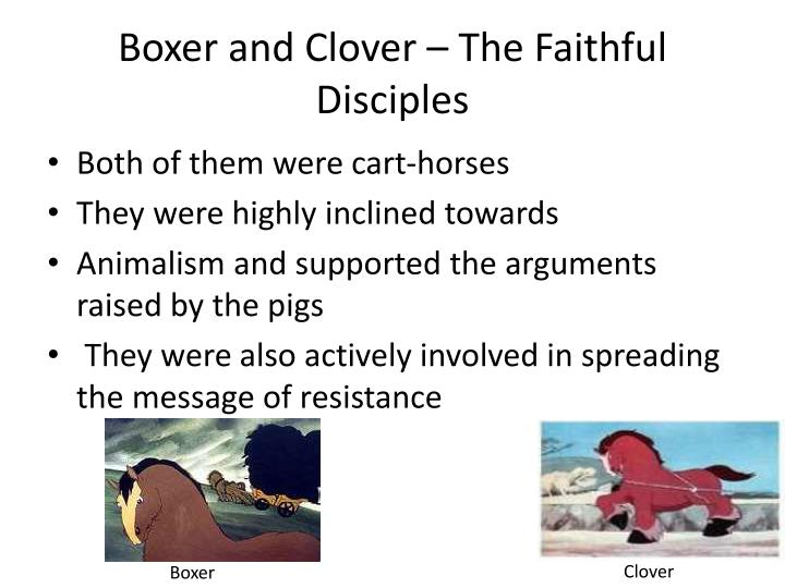 Boxer and Clover – The Faithful Disciples