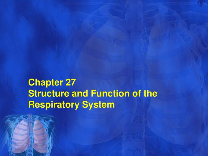 chapter 27 structure and function of the respiratory system n.