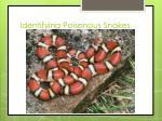 identifying poisonous snakes2