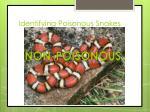 identifying poisonous snakes3
