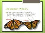 meullerian mimicry