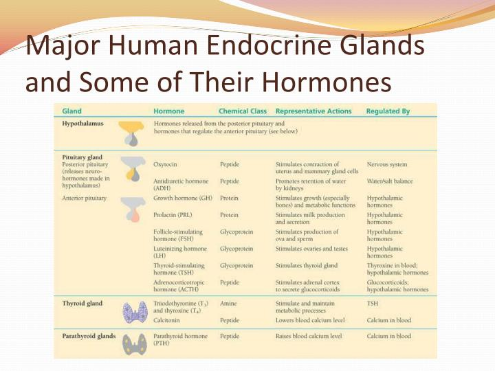diagram of adrenal glands ppt chapter 45 hormones and the endocrine system  ppt chapter 45 hormones and the endocrine system
