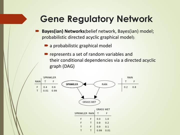 Gene Regulatory Network