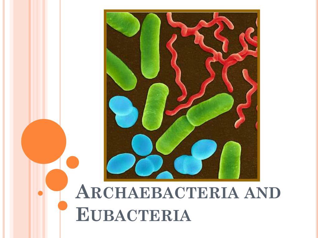 Ppt – kingdom eubacteria kingdom archaebacteria powerpoint.