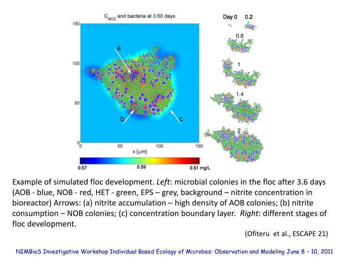 Example of simulated floc development.