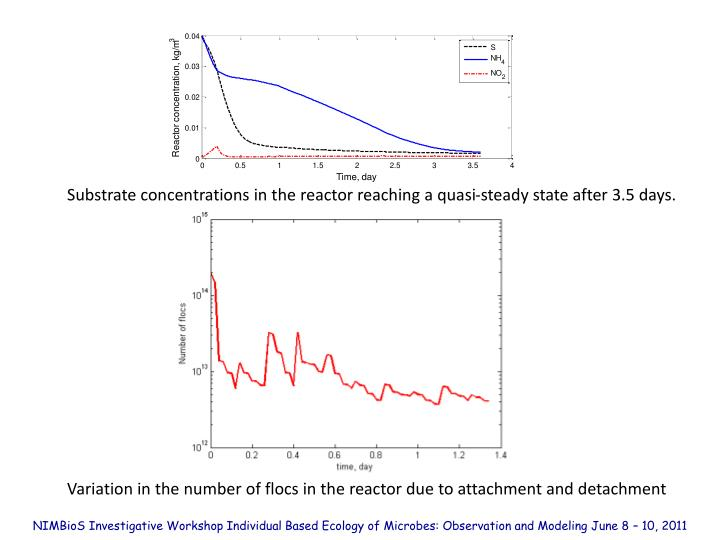 Substrate concentrations in the reactor reaching a quasi-steady state after 3.5 days.