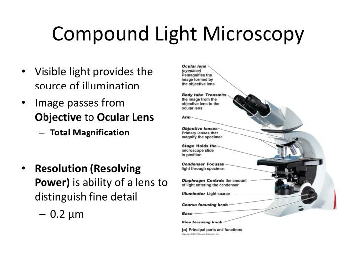 Compound Light Microscopy