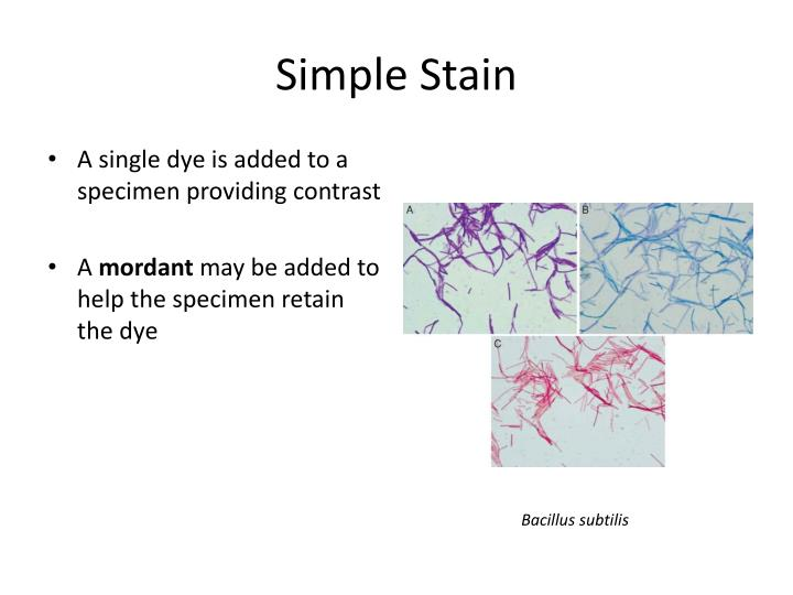 Simple Stain