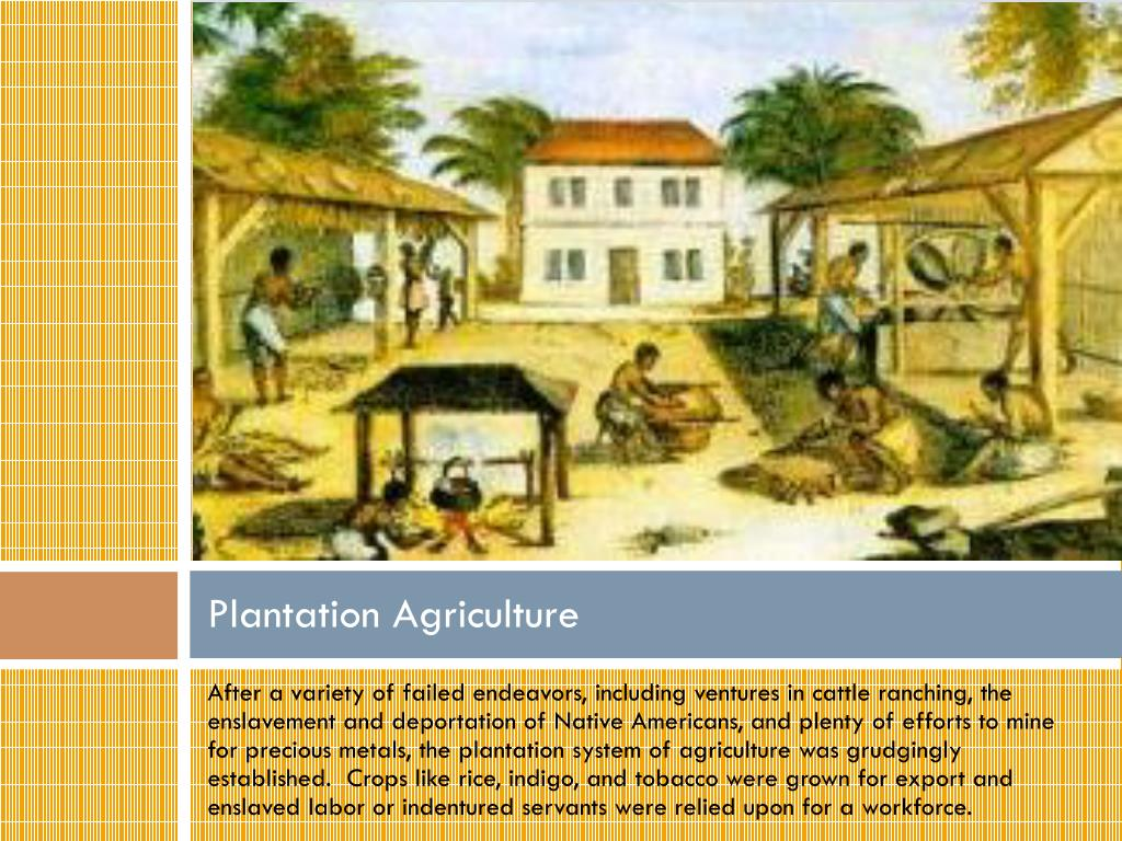 PPT - The Southern and Chesapeake Colonies PowerPoint ...