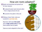 how are roots adapted