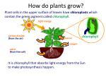 how do plants grow1