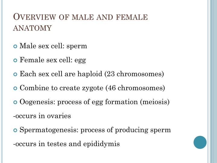 Ppt Reproductive System Powerpoint Presentation Id1995473