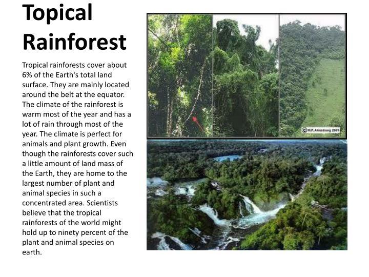 Topical rainforest