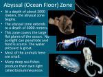 abyssal ocean floor zone