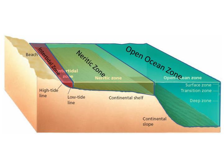 Intertidal Zone