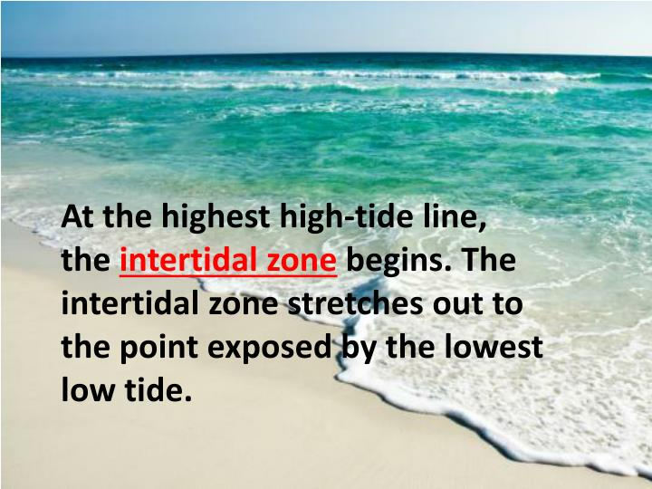 At the highest high-tide line, the