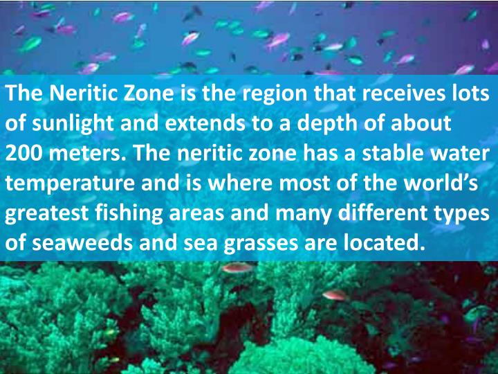 The Neritic Zone is the region that receives lots of sunlight and extends to a depth of about 200 meters. The