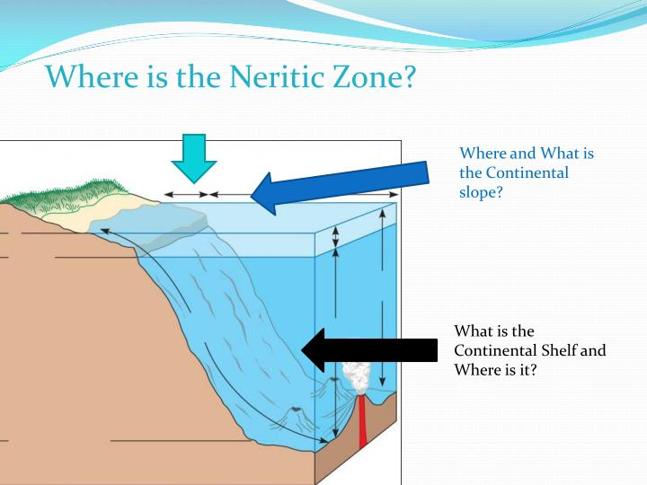 Where is the Neritic Zone?