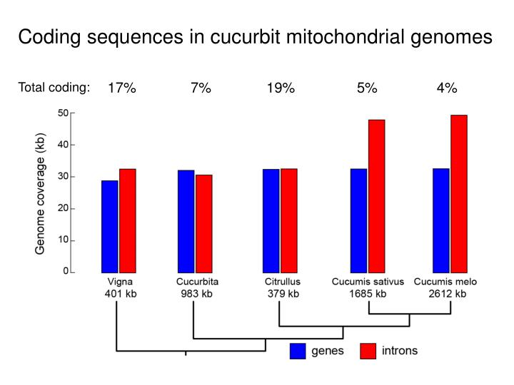 Coding sequences in cucurbit mitochondrial genomes
