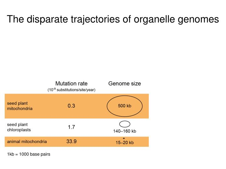 The disparate trajectories of organelle genomes