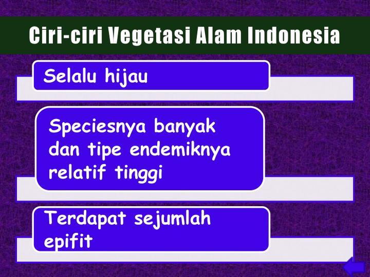 Ciri-ciri Vegetasi Alam Indonesia