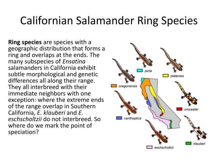 Salamander Ring Species California