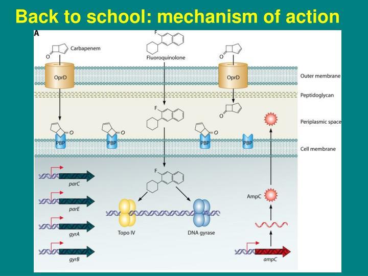 Back to school: mechanism of action