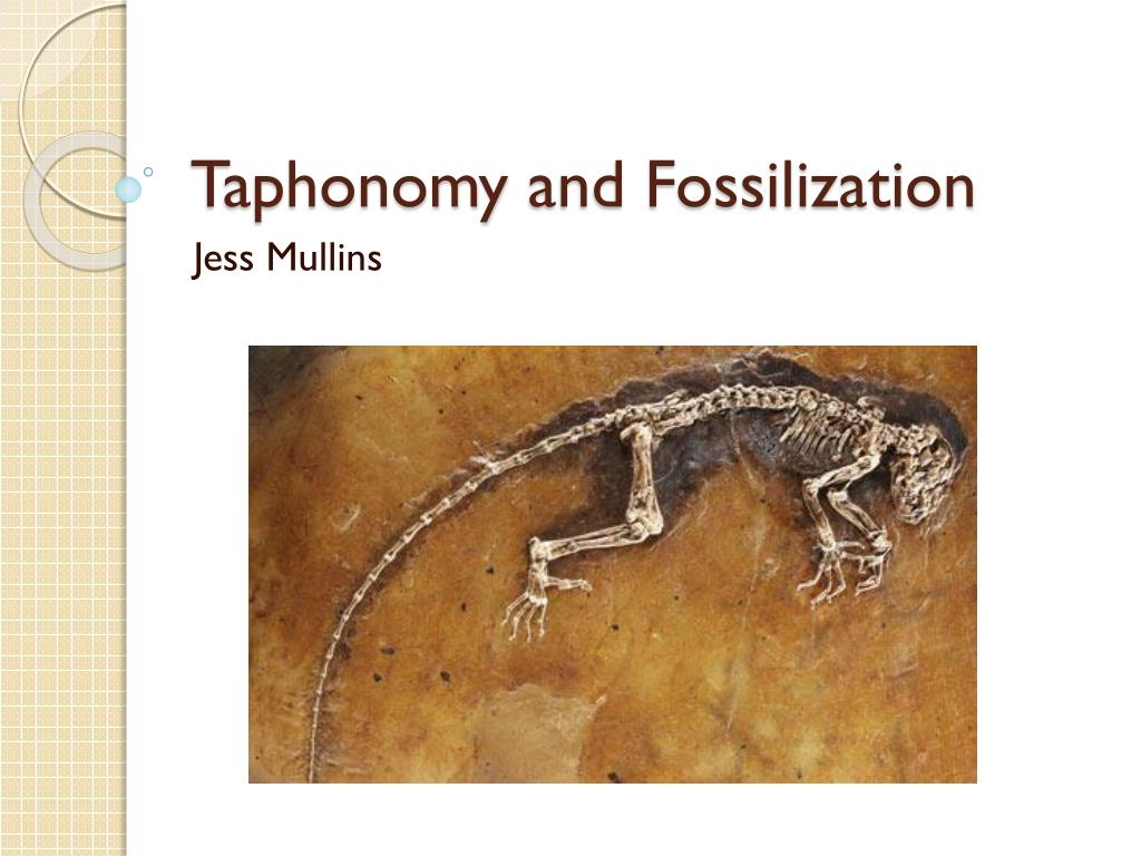 Taphonomy And Fossilization N