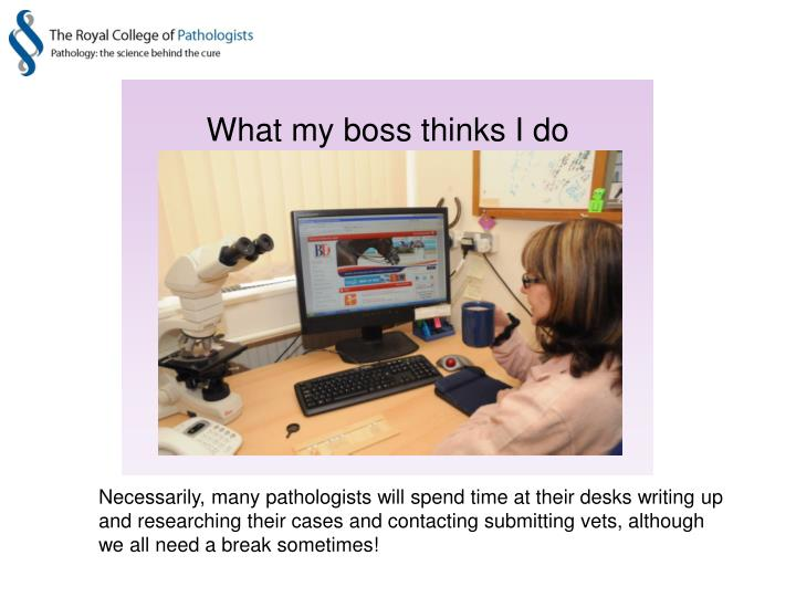 Necessarily, many pathologists will spend time at their desks writing up and researching their cases and contacting submitting vets, although we all need a break sometimes!