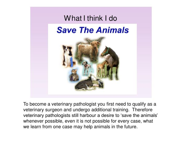 To become a veterinary pathologist you first need to qualify as a veterinary surgeon and undergo additional training.  Therefore veterinary pathologists still harbour a desire to 'save the animals