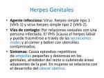 herpes genitales