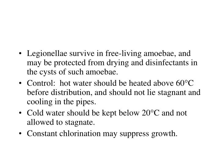 Legionellae survive in free-living amoebae, and may be protected from drying and disinfectants in the cysts of such amoebae.