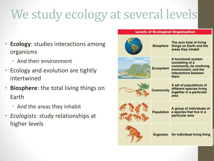 We study ecology at several levels
