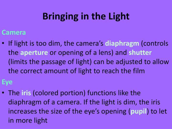 Bringing in the Light