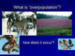 what is overpopulation