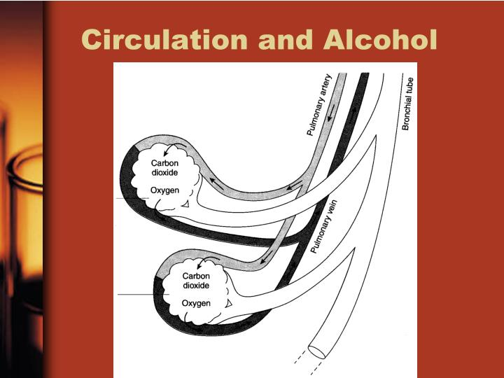 Circulation and Alcohol
