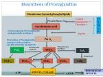 biosynthesis of prostaglandlins
