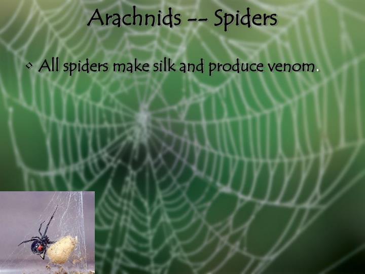Arachnids -- Spiders