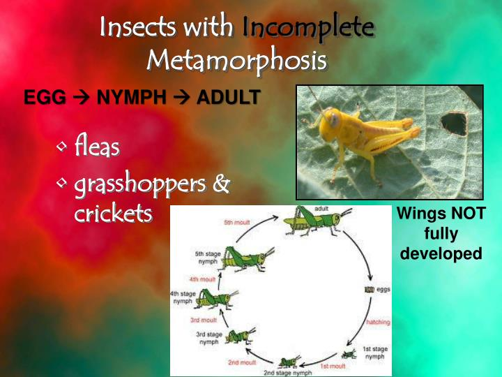 Insects with