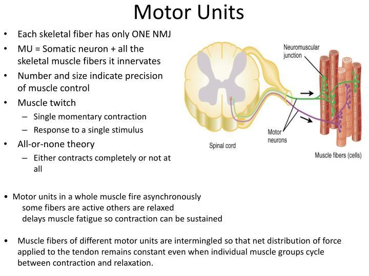 Motor Units