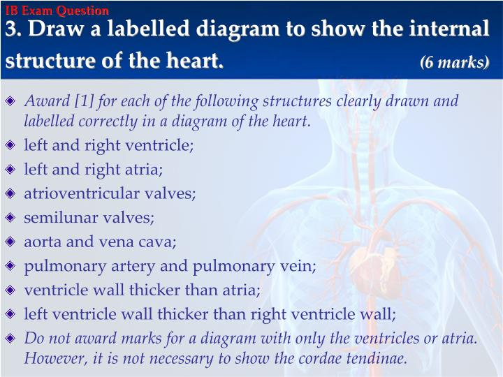 Ppt ib biology review powerpoint presentation id2000312 ib exam question ccuart Image collections