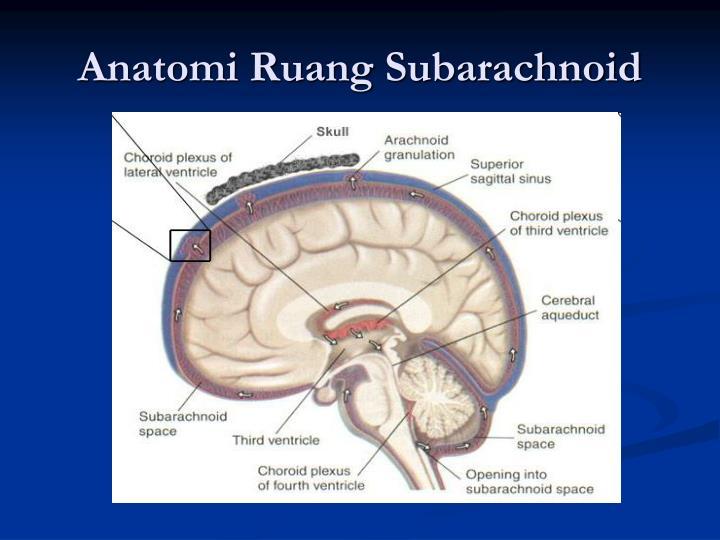Anatomi Ruang Subarachnoid