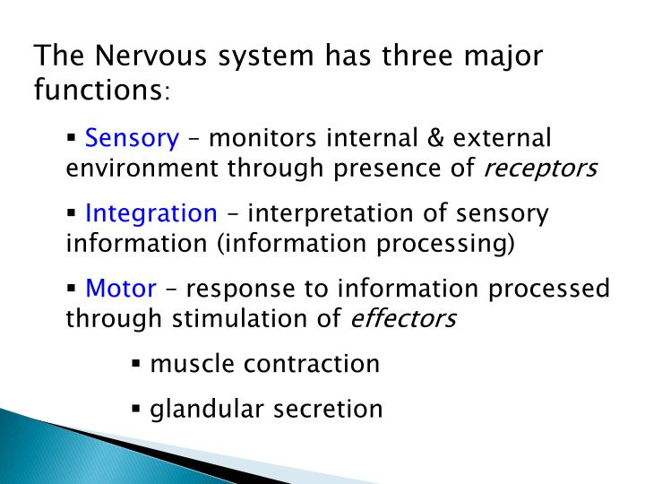 The Nervous system has three major functions