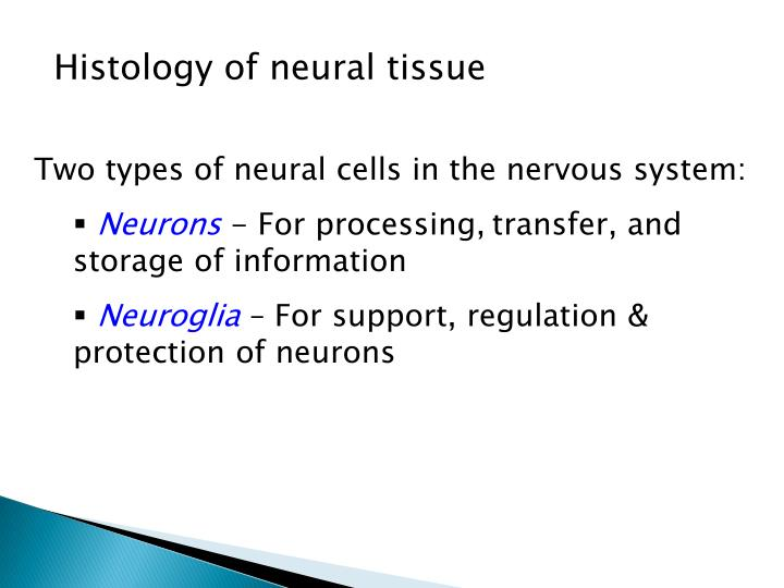 Histology of neural tissue