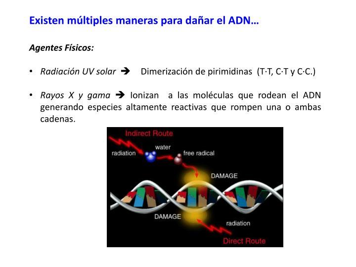 Existen múltiples maneras para dañar el ADN…