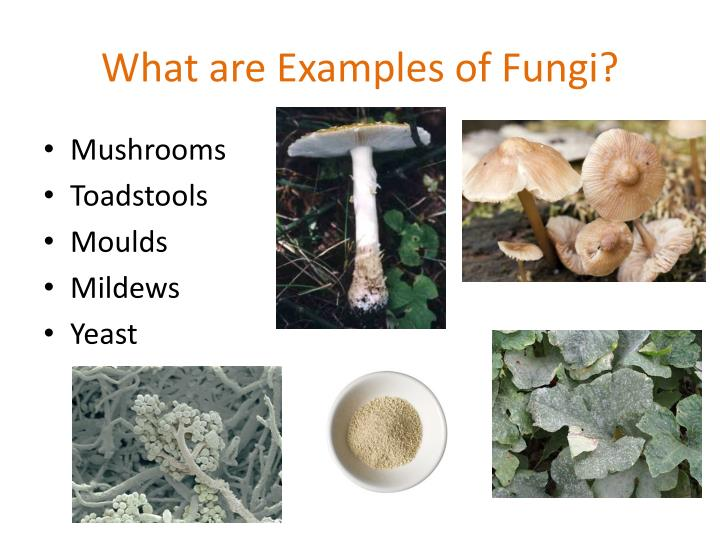 Fungi Cannot Make Their Own Food