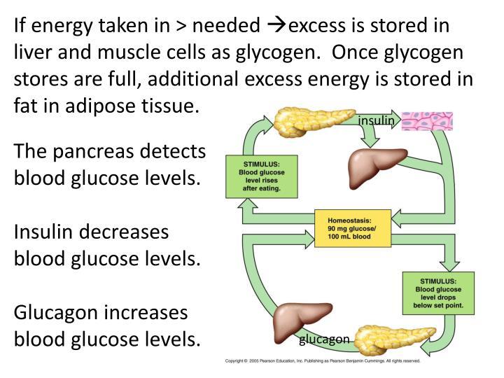 If energy taken in > needed