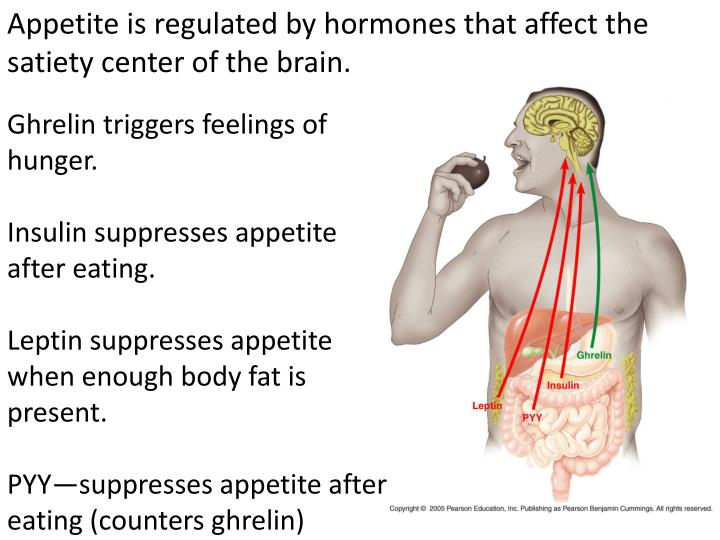 Appetite is regulated by hormones that affect the satiety center of the brain.