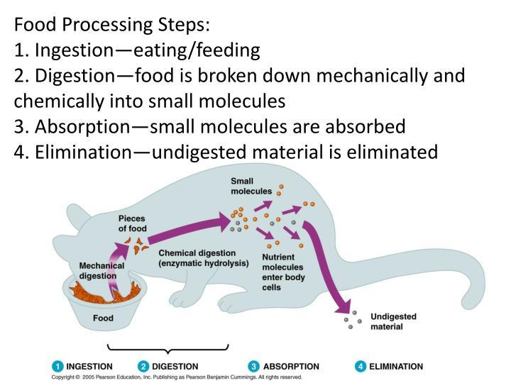 Food Processing Steps: