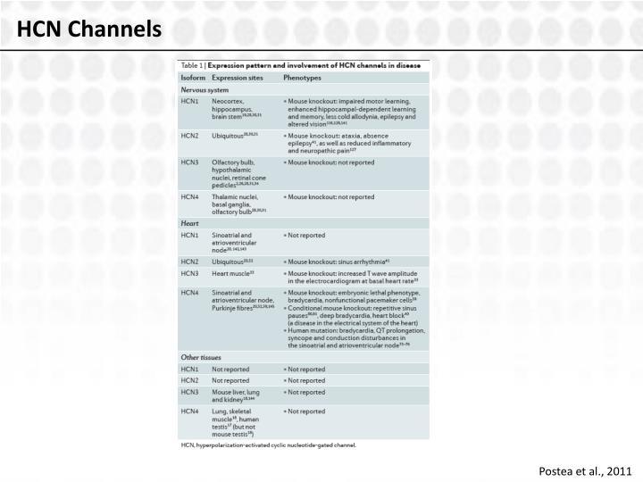 HCN Channels